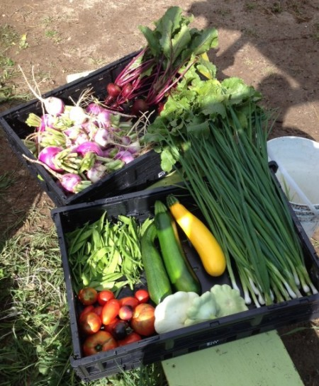 Varieties of Produce